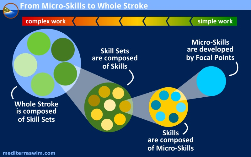 IMAGE microskills whole stroke B 800x500